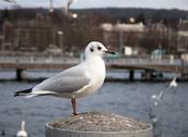 Gull in pier. Lake in background. Stock Photos