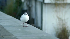 Lovely bird in Amsterdam Stock Footage