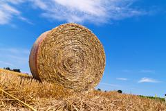 agriculture. field with straw bales - stock photo