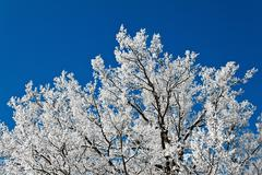 Landscape with hoar frost, frost and snow Stock Photos