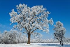 landscape with hoar frost, frost and snow on tree in winter. - stock photo