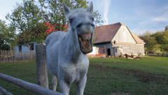 Horse scratching and yawning Stock Footage