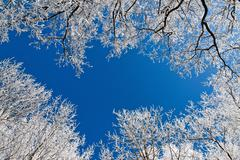 Landscape with hoar frost, frost and snow on tree in winter. Stock Photos