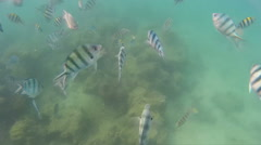 Many kind of fish swimming in the sea Stock Footage