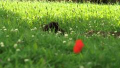 Black cat in long summer grass Stock Footage