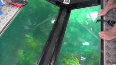 Tourists, glass bottom boat, Whitianga, Coromandel Peninsular Stock Footage