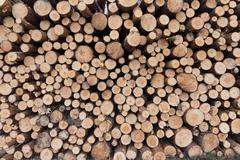 Stacked trees -lumber / wood background - stock photo