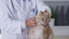 Veterinarian giving cat a checkup Stock Footage