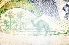 Dromedary in old  Tunisian banknote Stock Photos