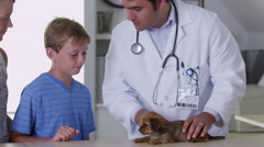 Veterinarian giving puppy a checkup - stock footage