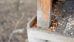 Empty birdhouse - feeding for birds - detail on grain Arkistovideo