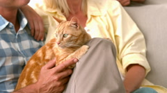 In slow motion happy couple with cat Stock Footage