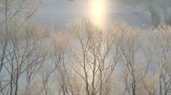 Early morning, sunlight, river, birds singing Stock Footage