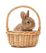 Bunny in a basket isolated on white background Stock Photos