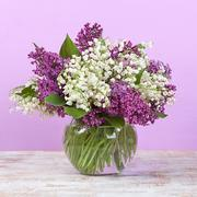 Spring bouquet. Lily of the valley and lilac in a vase - stock photo