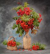 Autumn still life. Rowan branches in a vase and basket - stock photo