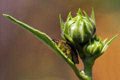 hemiptera inside - stock photo