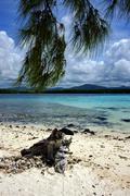 Tree in deus cocos mauritius Stock Photos