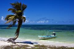 boat and palm in sian kaan mexico - stock photo