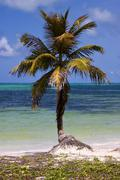 palm in the wind in the blue lagoon - stock photo