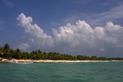 Ocean coastline  palm and tree in dominicana Stock Photos