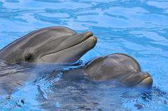 Two bottlenose dolphins Kuvituskuvat