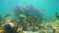 Caribbean coral reef underwater with tropical fish Stock Footage