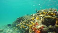 Underwater reef with school of juvenile fish Stock Footage