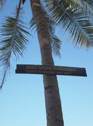Caution sign on Palm tree, beach warning Kuvituskuvat