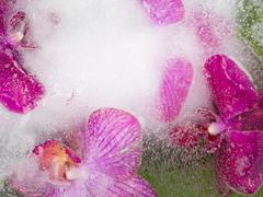 abstraction of purple orchids - stock photo