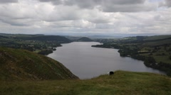 Black and white sheep unite elevated view Lake District Cumbria England UK Stock Footage
