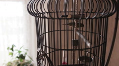 Bird in a cage Stock Footage