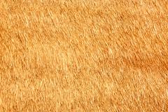 Thatch texture Stock Photos