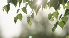 Leaf sun star panning - stock footage