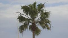 Palmtree Sky background Stock Footage