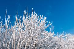Snowy trees over blue sky - stock photo