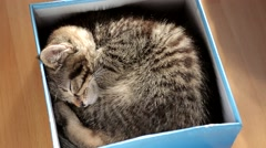 Sleeping kitten Stock Footage