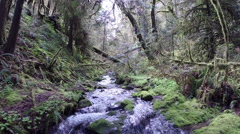 Stream flowing in deciduous forest - stock footage