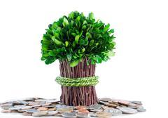 Money tree concept on isolated white background Stock Photos