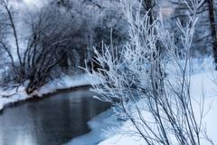 Hoarfrost on branches near the river Stock Photos