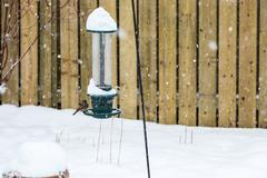 Sparrow on Bird Feeder During Snowstorm - stock photo