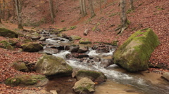 Autumn in mountains - creek in the beech forest Stock Footage