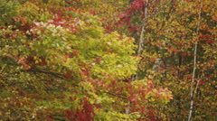 Fall foliage pan. Shot on RED SCARLET 4K, UHD, Ultra HD resolution Stock Footage