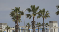Harbour Seaside Palm trees Stock Footage