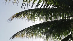 Closeup of palm tree leaves, silhouette Stock Footage