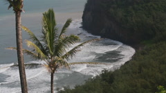 Aerial view of palm trees and cliffs overlooking the Hawaiian ocean Stock Footage