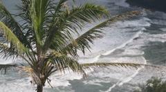Medium shot of a palm tree overlooking the Hawaiian ocean at Pololu Valley Stock Footage