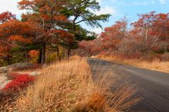 Beautiful fall colors by the country road. - stock photo