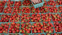 Stock Video Footage of Cartons of fresh strawberries for sale, HD 1080p beauty shot
