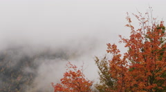Autumn leaves in a lifting fog, Shot on RED SCARLET 4K, UHD, Ultra HD resolution Stock Footage